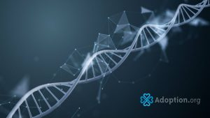 How Does DNA Help with an Adoption Search?