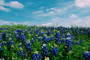 How Does Adoption in Texas Work?